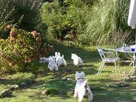 お庭で遊ぶ2