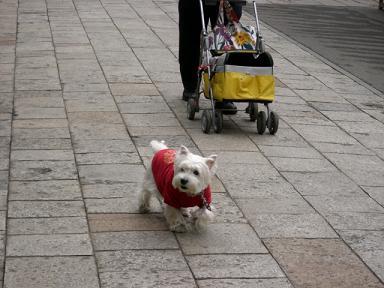 参道をお散歩