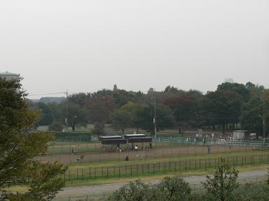 丘陵地から見たドッグラン