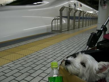 京都駅ホーム