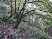 のぼり始めの森林の中
