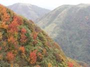 森林限界を抜けた景色
