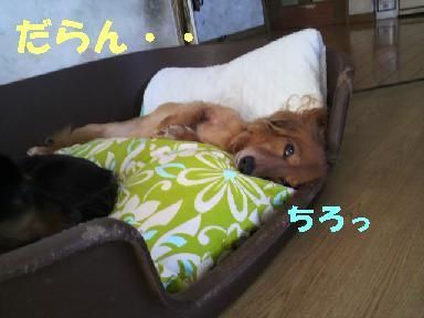 いぶっち5