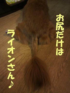 いぶちょい2