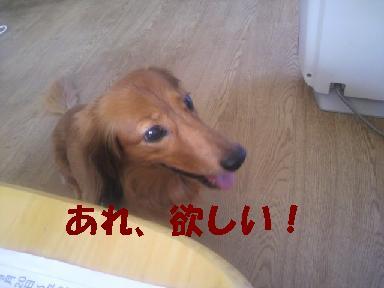 いぶちょい3