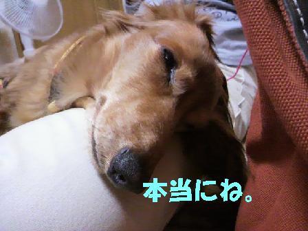 ちるこはん10