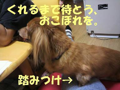 いぶちょい6