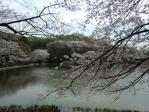 景色 2011年4月10日 三ツ池公園4