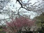 景色 2011年4月10日 三ツ池公園5