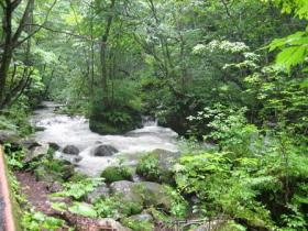 奥入瀬渓流1
