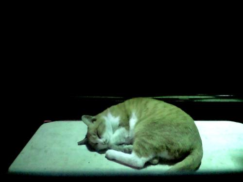 cattopp.jpg