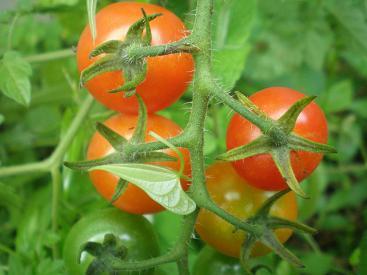 7月の庭2009-5