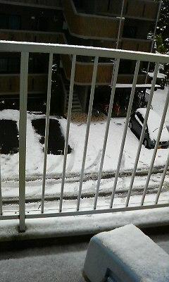 200901130814000雪.jpg