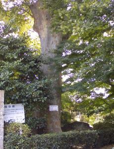 保存樹_convert_20090828021719