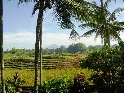 Bali2010-s.jpg