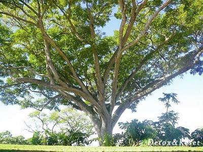 D&R Tree