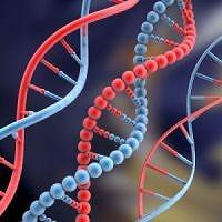 s-DNA.jpg
