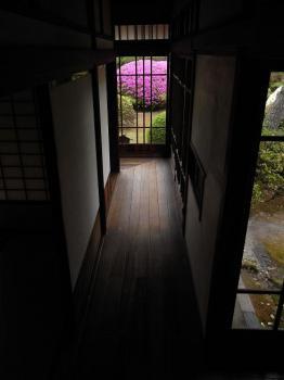廊下からサツキを眺める