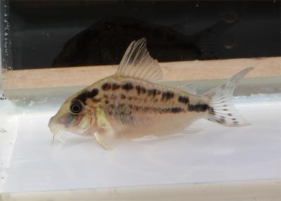 2011-12-16LNエヴェ