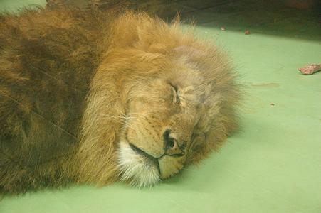 100214_lion.jpg