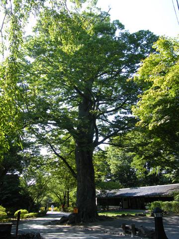 20080914_kaikoen-36.jpg