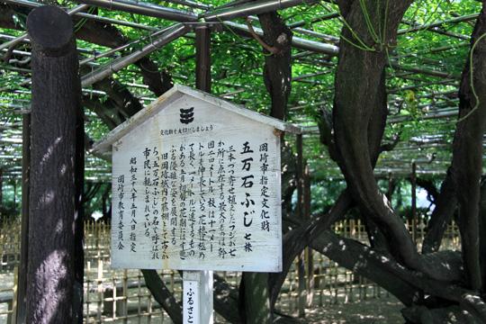 20090614_okazaki_castle-18.jpg
