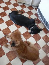 ペコ&リサ-a