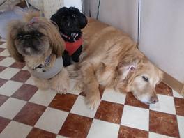 3-3看板犬-a