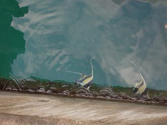 3.1西表島 白浜港 熱帯魚2c