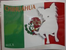 旗 チワワ(座り)-c