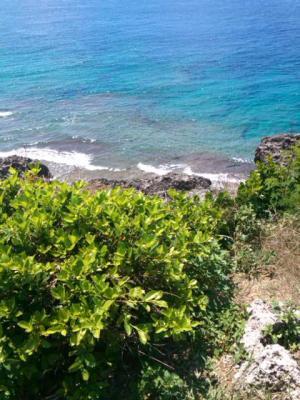 沖縄の海と草N3R0461_convert_20110929194552