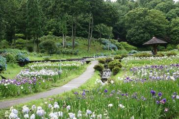 百年公園 菖蒲園