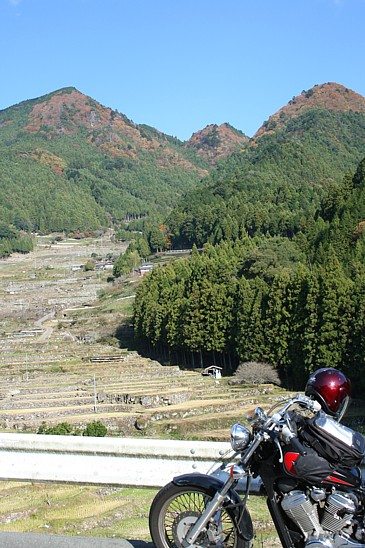 四谷千枚田2008秋