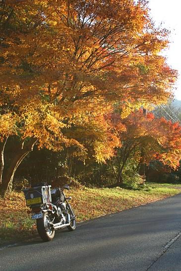 矢作ダム 道端の紅葉