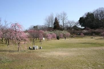 豊田市 平芝公園 梅1