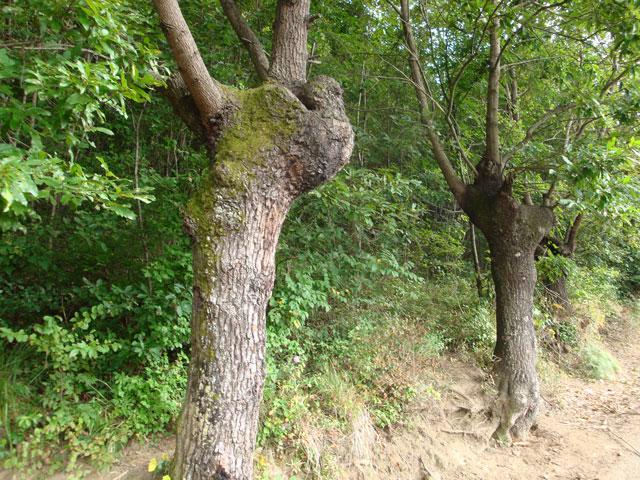 090828_tree4