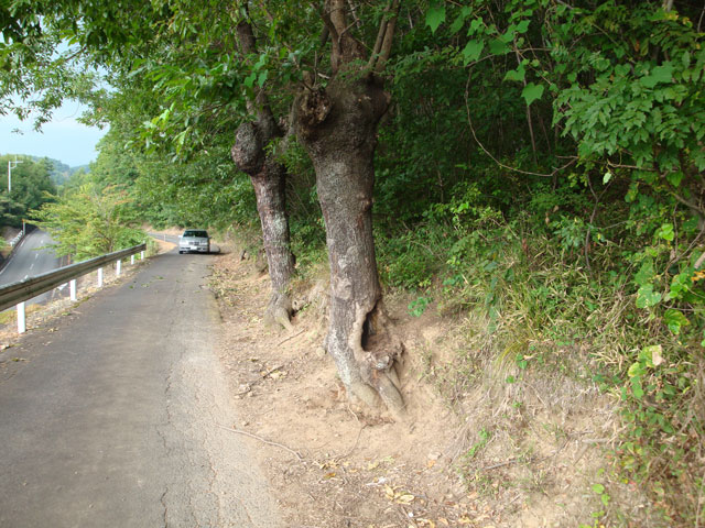 090828_tree5