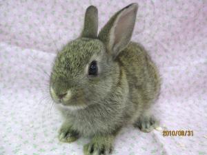 ミニウサギ0831