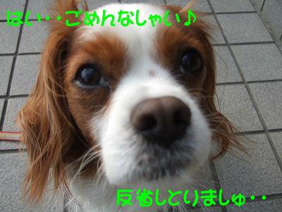 2009_0218FinePix0506080035.jpg