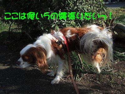 2009_0218FinePix0506080086.jpg