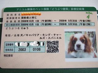 snap_dragonouji_20098411118.jpg