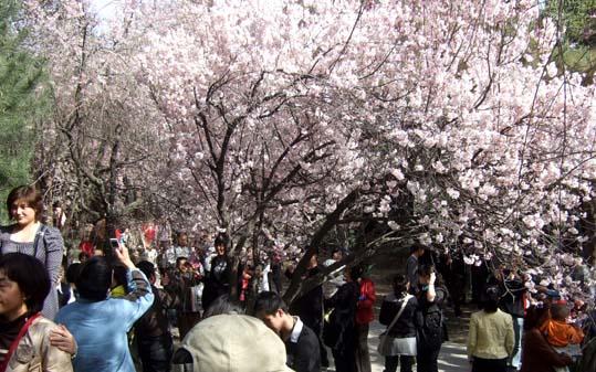 20100326 西安  静龍寺 011 19cm