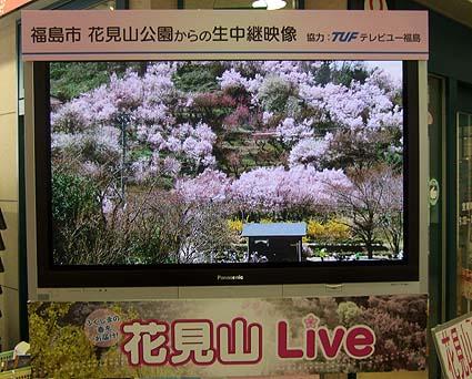 20100408 福島 花見山 002 生中継 15cm