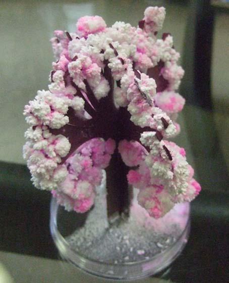 20100423 Majic 桜 002 16cm