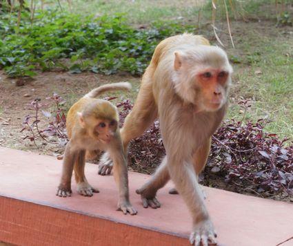 猿DSC01338 15cm