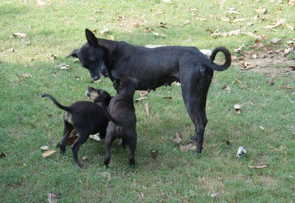 犬DSC01366 15cm