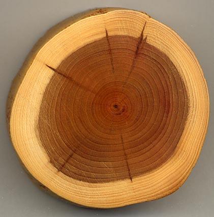 Taxus_wood.jpg