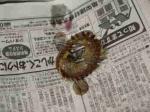 太刀魚かき揚げ丼16