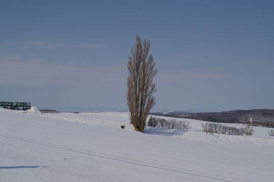 ケンとメリーの木(冬)