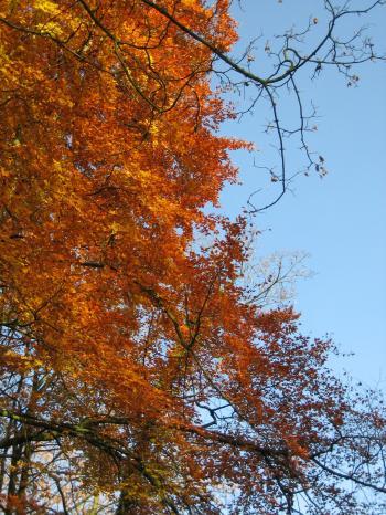 2008-11-16+(7)_convert_20081124003453.jpg